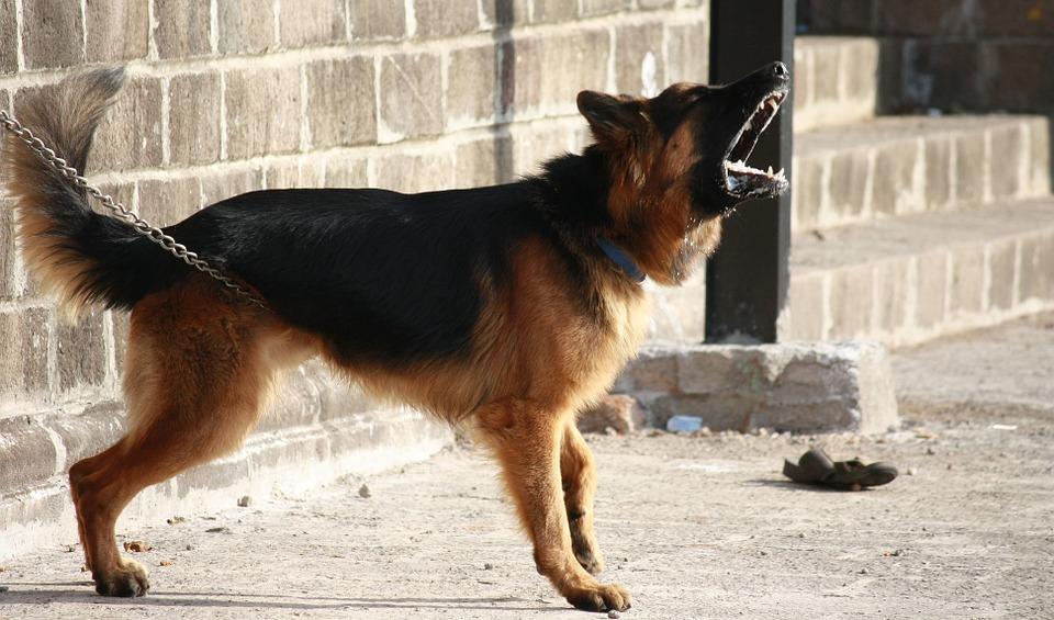 blaffende hond